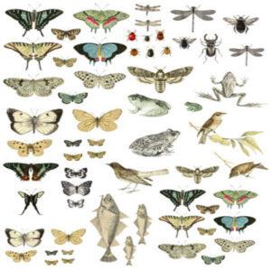 IOD Entomology Decor Transfer