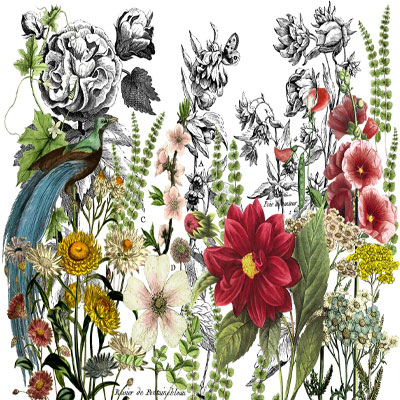 IOD Midnight Garden Decor Transfer