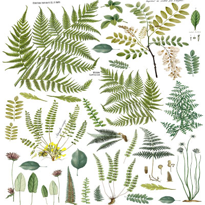 IOD Fronds Decor Transfer