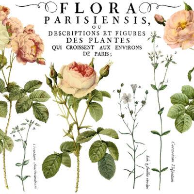 Flora Parisiensis IOD Transfer