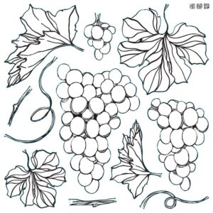 Grapes Iron orchid Designs stamp