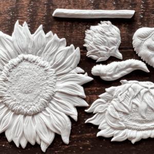 Sunflower mould IOD